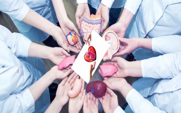 جمعية (REINS) تطلق حملة بالتزامن مع اليوم العالمي للتبرع بالأعضاء وزرعها